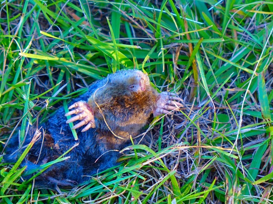 I also think its important to mention that a saw a zombie mole.